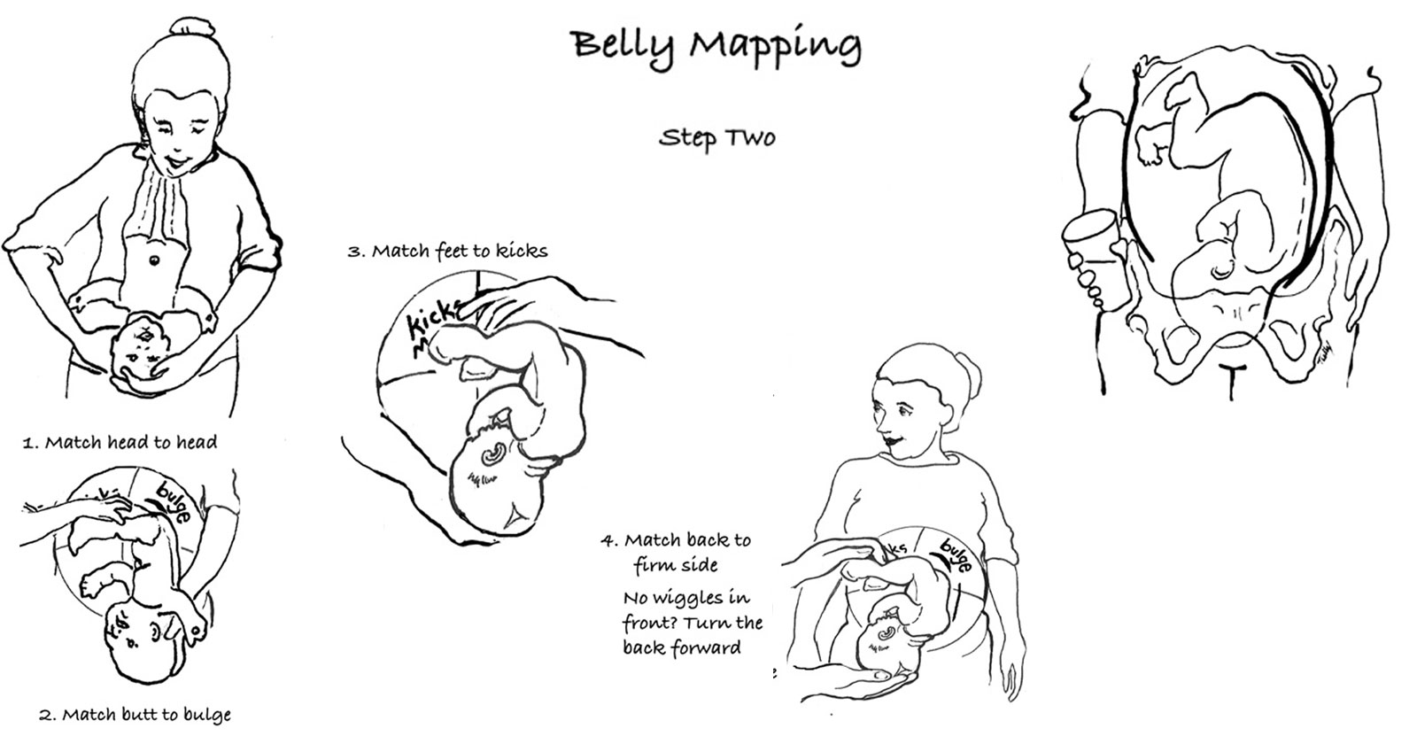 bellymapping