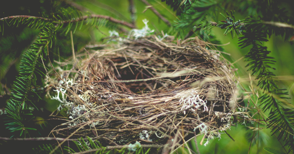 nest-918898
