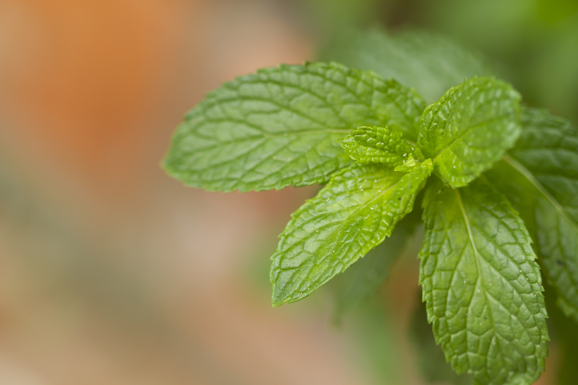 Herbs for Mother's Care Postpartum | Midwifery Today