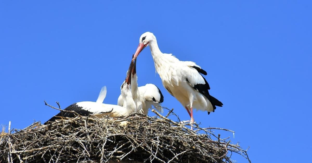 stork-3564786_1280